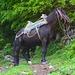 Pferd am Wegrand unterweg zur Alp Zarunica.