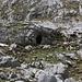 Erkennt man auf dem Bergweg zum Pass Ćafa Borit (1850m) auf der gegenüber Talseite eine grosse Höhle, sollte man spätestens zur Alpebene Katun Grlata absteigen. Die Höhle eignet sich auch als Unterstand oder Biwakplatz.