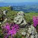 Auf dem Bluemhorn hat es Blumen ((-: