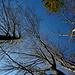 Blick in den stahlblauen Abendhimmel