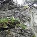 Dieses feucht-schmierige Wändchen konnte dank eines herabhängenden Asts gut überwunden werden