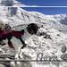 Nora enjoying the snow and hike geniesst den Schnee und die Wanderung