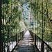 Die alte Passarella in einer Aufnahme vom 19. Juli 2003. Das Begehen der Brücke war damals offiziell bereits verboten, dennoch herrschte reger Personenverkehr...