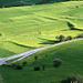 Les champs verts et jaunes
