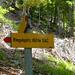 Aufstieg durch den Sgaiwald zur Ringelspitzhütte