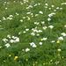 Blumenfelder überall