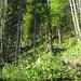 Im Wald auf dem Weg zur Holzegg