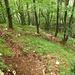 Downhill-Piste