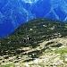 il pianoro di pino mugo all' alpe Chiera