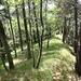 hübsch ist der relativ offene Wald mit der Grasbewachsung