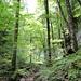 ... in den frisch-grünenden, lieblich-wilden, felsigen Einschnitt