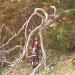 Sebastian mein Arbeits- und Tourenkollege unter einem etwas anderen Baum.