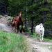 Pferde mit riesigem Auslauf.