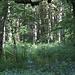 Der neue Tag erreicht den Wald