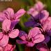 Fleur (pour l'instant) inconnue de Norvège
