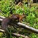 Endlich einmal ein Eichhörnchen