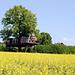 Das Baumhaus bei Hildisrieden