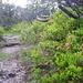 In diesen Höhen (ca.1700m) blühen schon die Almrosen.