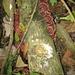 schön gefärbte Baumpilze im Regenwald