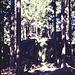 Am Weg zum Gipfel, Granitfelsen am Ochsenkopf