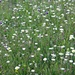 was für erfreuliche Blumenwiesen passieren wir zur Jänzimatt!