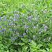 Blumenbuquet am Wegrand
