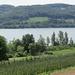 der Weg nach Stein am Rhein wird von Weinbergen gesäumt