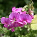 ein Schmetterling auf schöner Blume