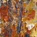 Farbenspiel in der Baumrinde