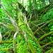Zauber Wald im Wägital