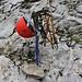 Für den Schlussaufstieg zum Henglihorn über den Nordostgrat kann ich das Material welches ich im Schneebändli gebraucht habe beim P.2589m zurück lassen.