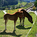 Pferde in Guarda Staziun