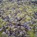 Das Moos erobert sich die Asche zurück (Foto [U sglider])