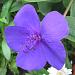 """tolle blaue Blüte mit """"Angelhaken"""""""