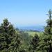 in Augenhöhe mit den 40 Meter hohen Baumwipfeln - Blick zum Bodensee