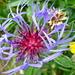 Stimmige Farbkombination bei dieser schönen Blume