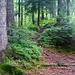 Durch märchenhafte Wäldchen gehts zum Hochmoor Mettlilimoos.