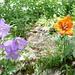 Flora auf der Lägeren.