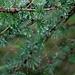 Regentropfen und Spinnweben