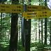 ....laut Handy-Thermometer 27 Grad ...im Wald...