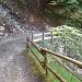 Sur la route forestière