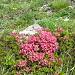 Wunderschöne Wildblumenpracht am Weg zum Lachenstock, fotografisch kaum einzufangen.