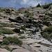 Abstieg vom Precipice Peak - Nach dem Abstieg über den Grashang ist der Bachlauf zu queren. Hier eine geeignetere Stelle - als auf dem Foto vom Aufstieg.
