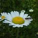 Blumenidylle am Gehrihore