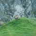 Interessante Tierbeobachtungen in der Westflanke kurz unterhalb des Sattelhorns.