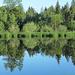 Uferspiegelung am Waldsee