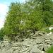 Die Ruinen von Corte, oberhalb Aiarlo