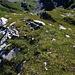 Auf dem kleinen Gipfelchen Rinderbüel (2135m).