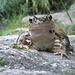 La simpatia della rana...