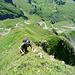 Steiles Gras in der Druesberg Südkante